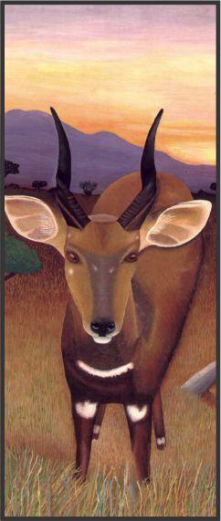 No. 10. Bushbuck