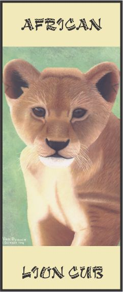 No. 1. African Lion Cub