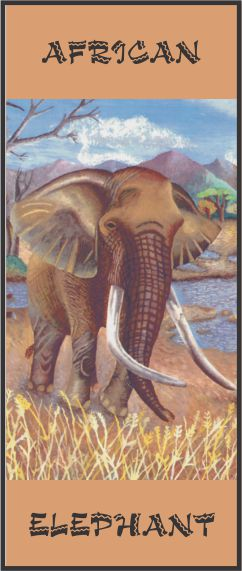No. 23. African Elephant
