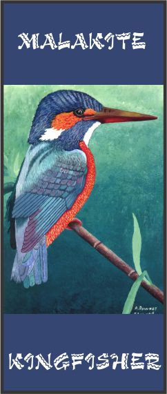 No. 5. Malakite Kingfisher