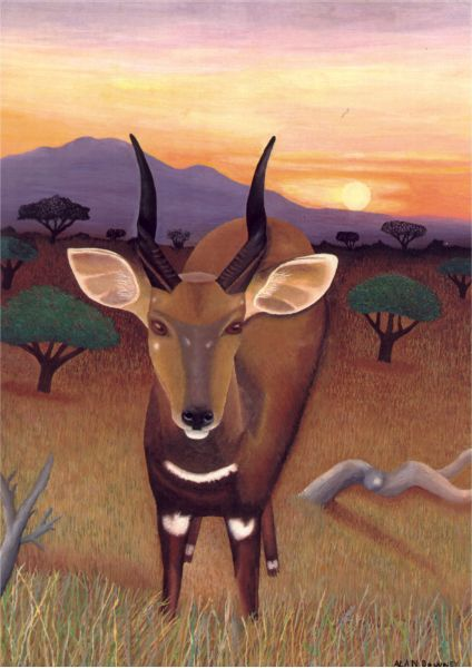 Bushbuck in African Sunset