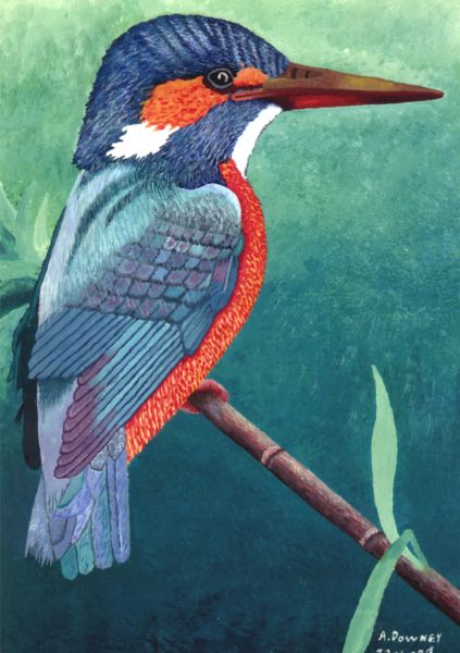 Malakite Kingfisher