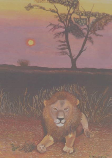 Male Lion in African Sunsret